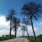 Straßenbild, hochkant mit markanten, schlanken, unbelaubten Alleebäumen, die sich im blauen Himmel verlieren