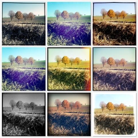 36 Kastanien serielles Foto irgendlink