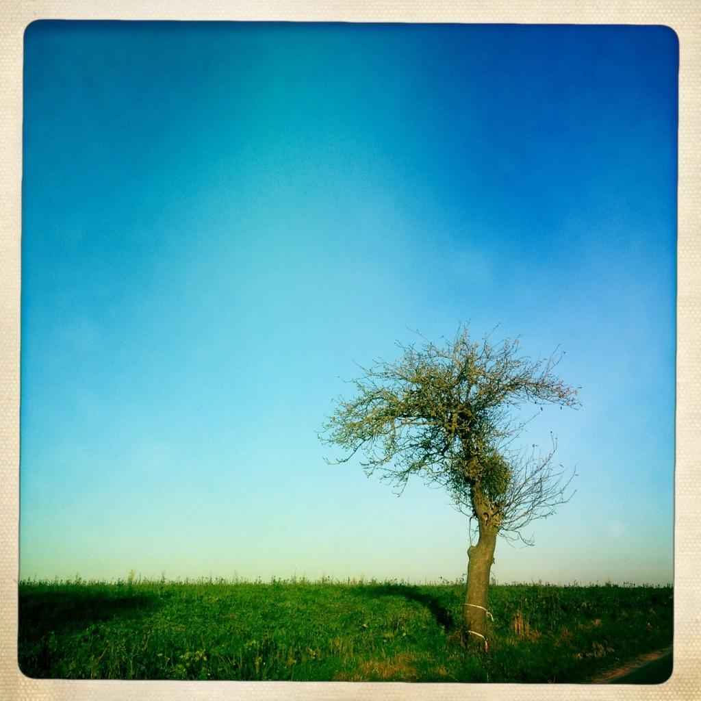 Apfelbaum im Herbst - exzentrische Hipstamatic Aufnahme