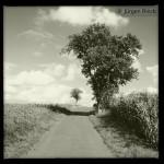 Birnbaum mit Maisfeld zur Rechten