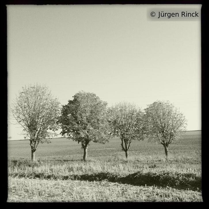 Vier Kastanienbäume