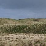 Grasdünen südlich vom Dunnethead Schottland