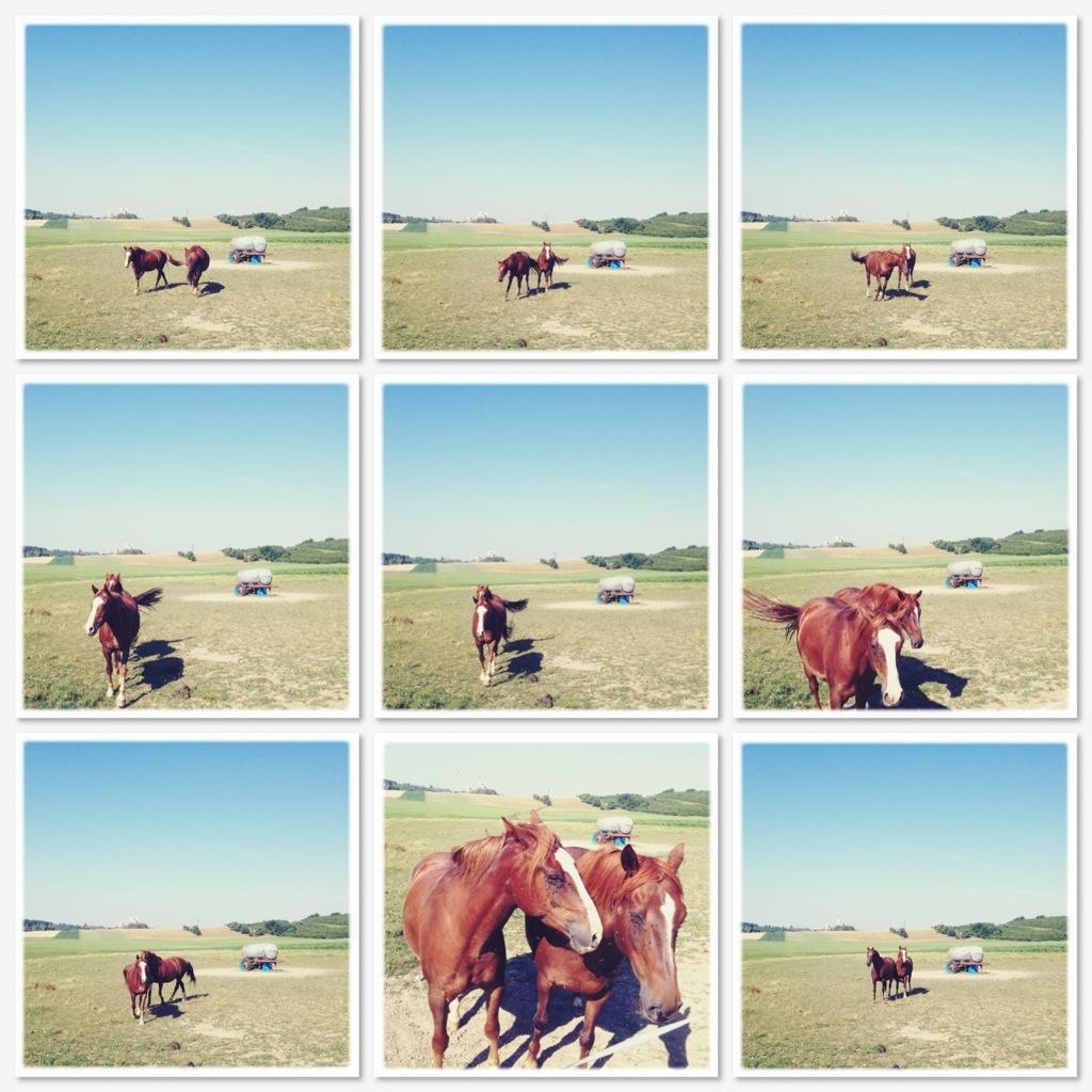 Trinken aus den Augen der Pferde Collage