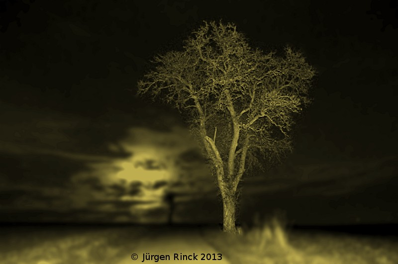 Birnbaum im Gegenlich des Vollmonds Sepiaton monochrom