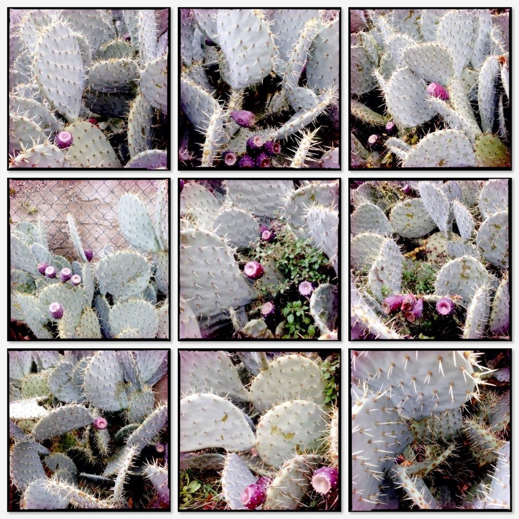 Collage neun Kakteen by Irgendlink
