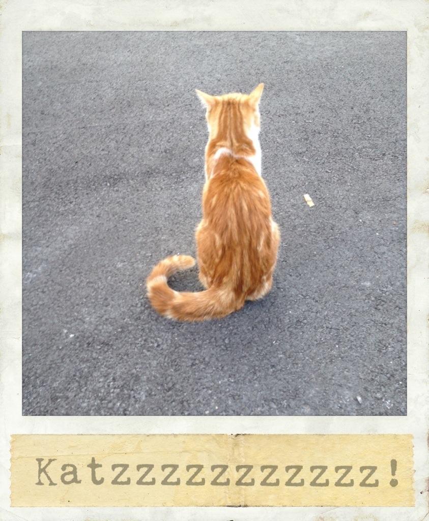 Rote Katze mit dem Rücken zum Betrachter auf Teerfläche Polaroidstil Foto