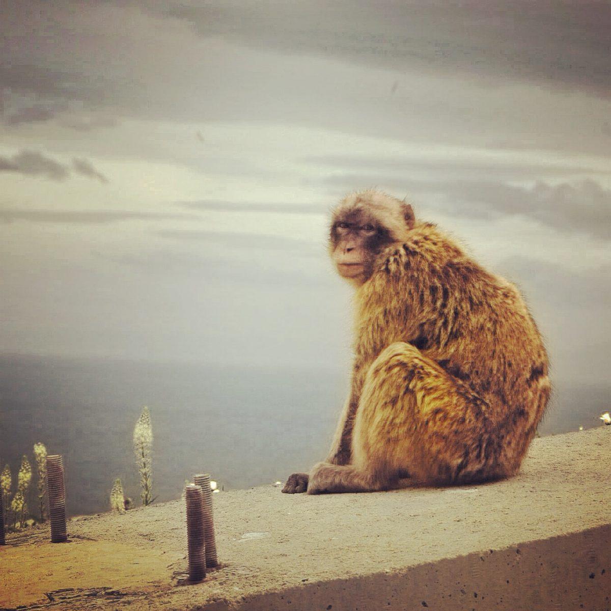Gibraltar – #Gibrantiago