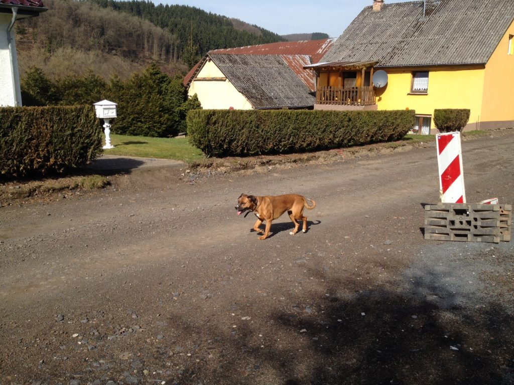 """Wachhund nahe dem kleinsten Museum """"wArtehalle"""" in Rheinland-Pfalz"""