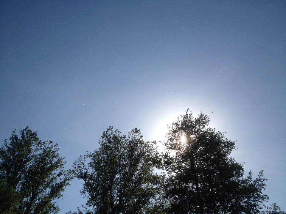 Sunny fliegt