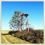 Der Unterbau eines Hochsitzes mit Leiter in einer Hecke.