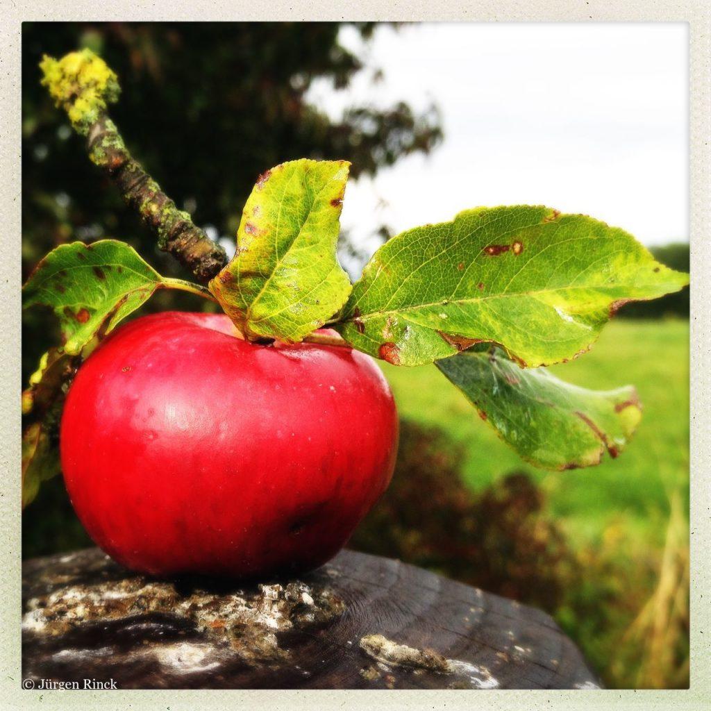 Knallroter Apfel mit Ästchen und ein paar Blättern.