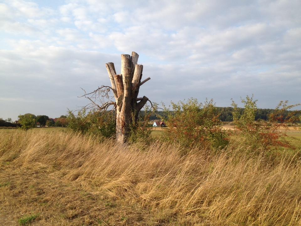 Eine geskappte Weide vor hohem, dürrem Gras.