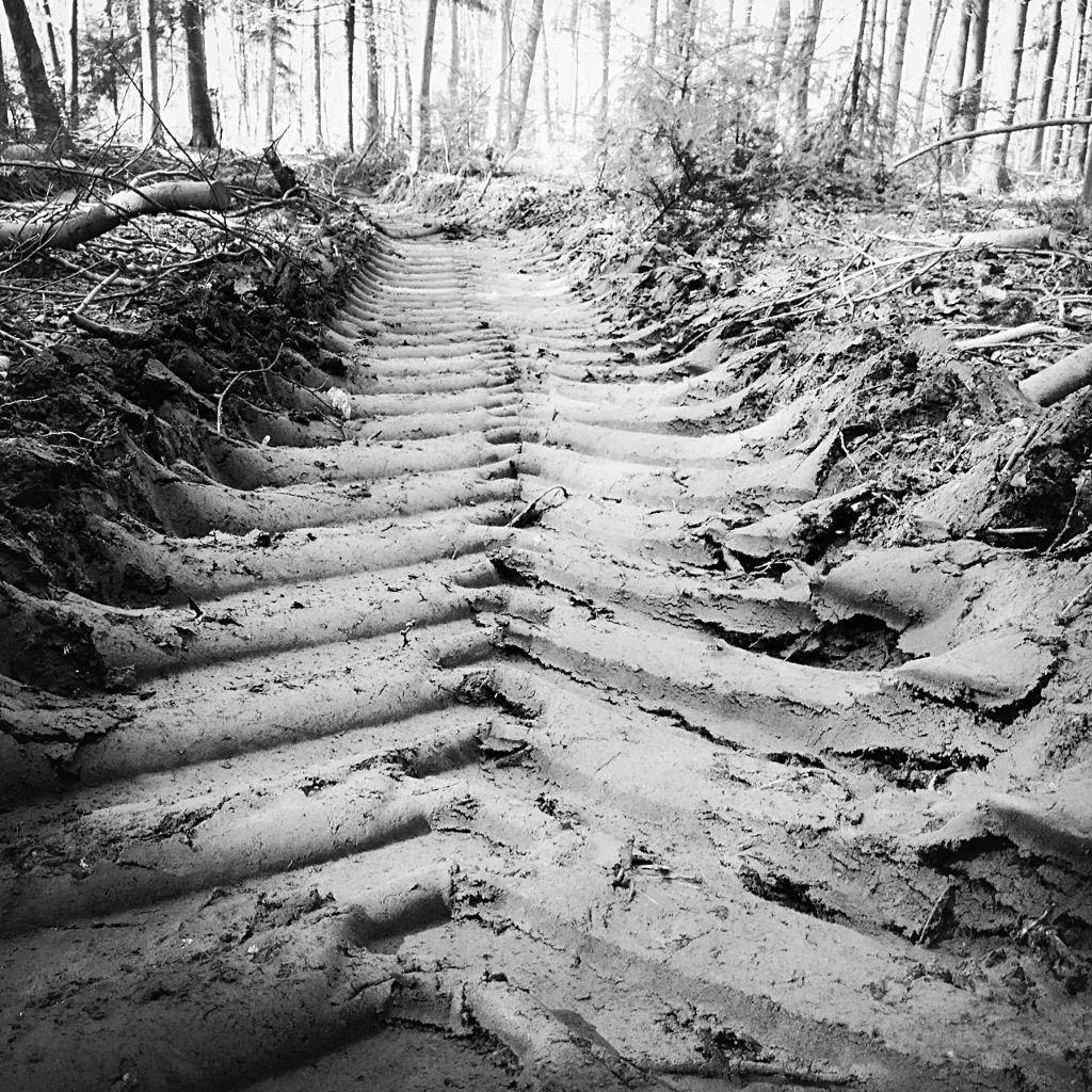 Quadratisches Schwarz-Weiß-Foto. Traktorspur im Wald, die mit viel Phantasie aussieht wie ein Rippenskelett.