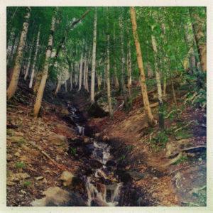 An einem sehr steilen Hang fließt ein schmales, weißes Rinnsal über braunen Waldboden. In der oberen Hälfte des quadratischen Bildes stehen junggrüne Bäume.