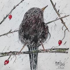 Vogelzeichnung, sitzender Vogel auf dornigen Ästen mit roten Früchten.