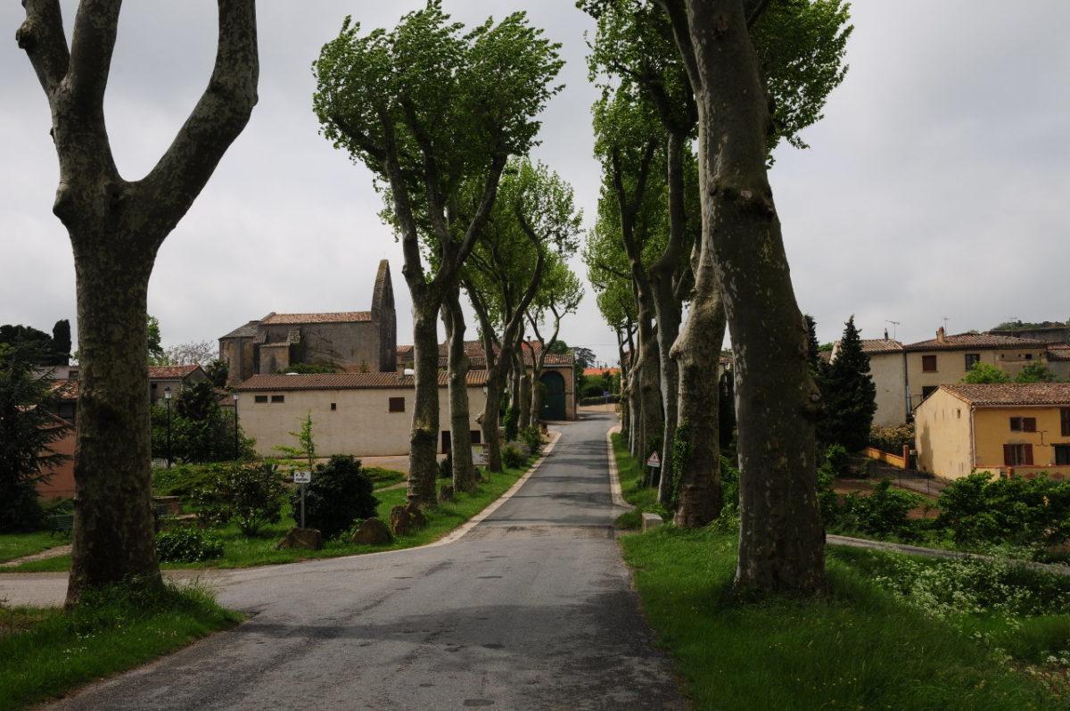 Schmale Straße durch eine frisch gestutzte beidseitige Platanenallee führt auf ein Dorf zu.