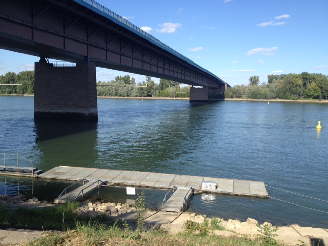 Autobahn-Rheinbrücke zwischen Rheinland-Pfalz und Hessen von unten betrachtet. Ein Holzste4g im Wasser. Darüber Blauhimmel.