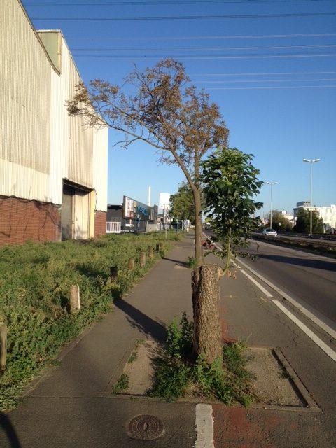 Radweg mit gutgemeinten Bäumchen bepflanzt, die den Weg schmal machen. Links im Bild Häuserfront, davor Hecken, rechts Autostraße, darüber Blauhimmel und Stromkabel.