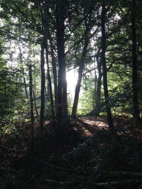 Im Wald, zwischen den Baumstämmen flutet LIcht auf den Waldboden.