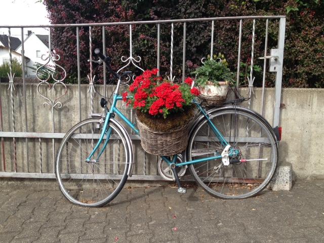 Hellblaues Fahrrad an schmiedeisernem Gitter gelehnt, mit einem Korb dekoriert, in welchem rote Begonien blühen. Im Hintergrund eine Hecke und Häuser.