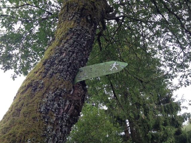 Baumstamm von unten fotografiert, aus welchem ein grüner Langlaufloipen-Wegweiser herauswächst. Darüber Äste und Laub.