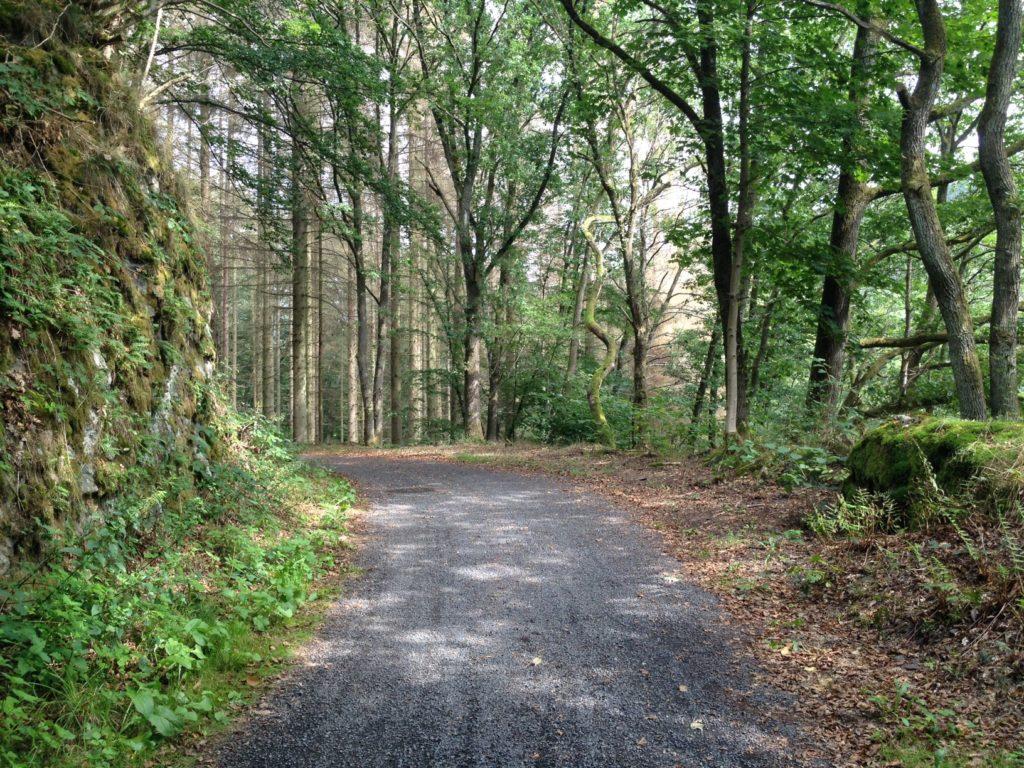 Ein Waldweg, der von vorne Mitte nach hinten links verläuft. Links felsige Wand, grün bewachsen, rechts Bäume.