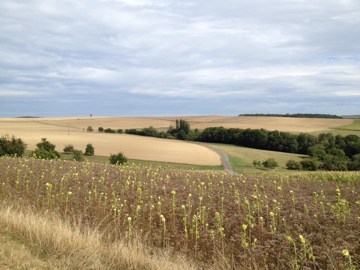 Kahl geerntete Felder hinter Sonneblumenfeldern.