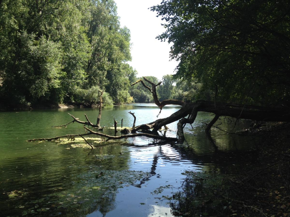 Direkt am Fluss: Links und rechts Bäume, die übers Wasser ragen. In der Bildmitte ein abgebrochener kahler Ast, der sich im Wasser spiegelt. Der Himmel ist milchig-blass.