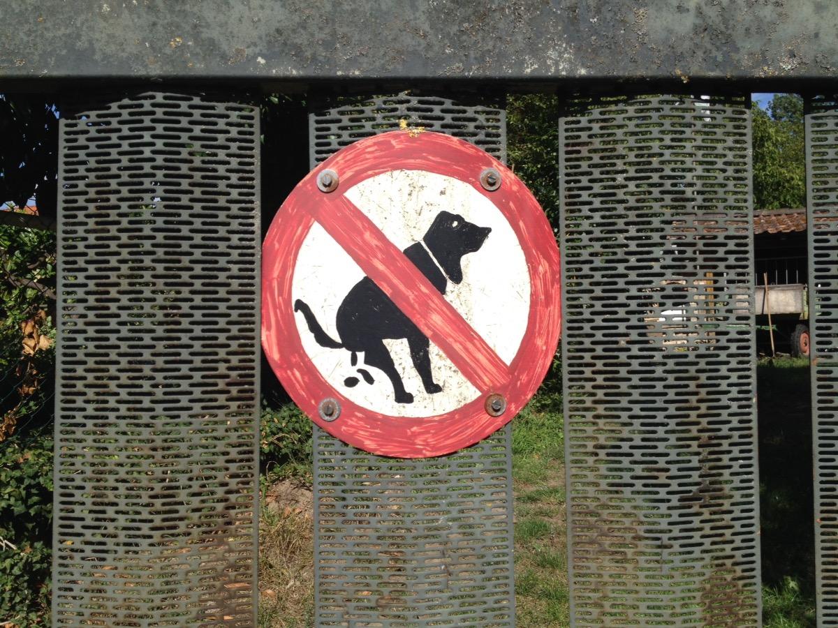 Selbstgemaltes Verbotsschild, das Hunden hier das koten verbietet, angeschraubt an Metallgitter vor einem dahinter verschwommen sichtbaren Gehöft