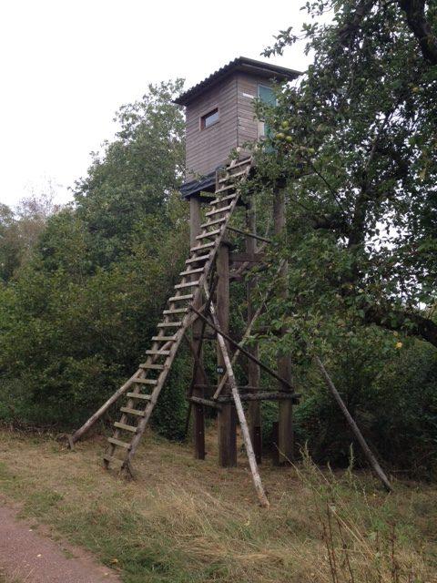 Ein klassischer Hochsitz, der wirklich sehr hoch ist und eine sehr steile Leiter hat. Umgeben von Bäumen.